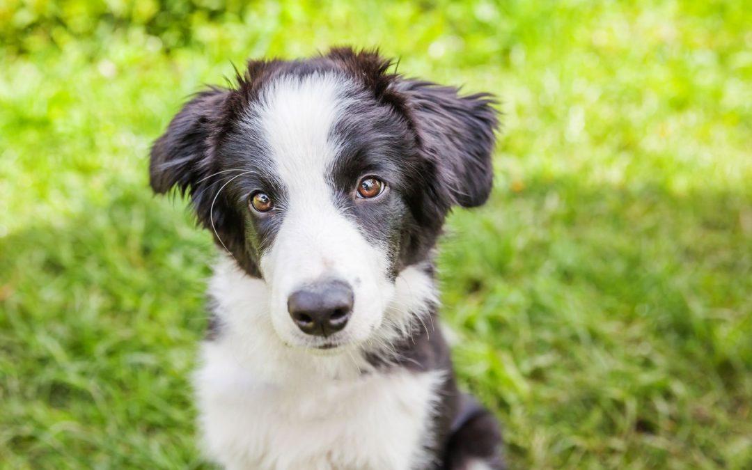 Kutyát szeretne vásárolni?