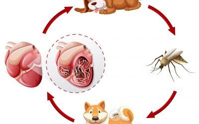 Szív- és bőrférgesség